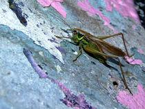 Heuschrecke auf Graffiti-Wand (grasshopper and colorfull wall) von Dagmar Laimgruber