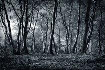 Forest von Anne Staub