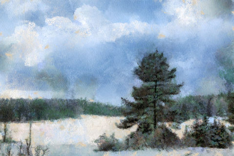 Winter-forest-tree