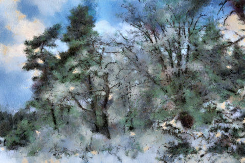 Winter-forest-trees