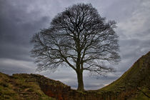 Sycamore Gap by David Pringle