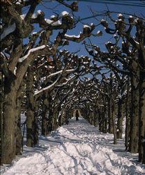 An einem kalten Wintertag by Angela Bruno