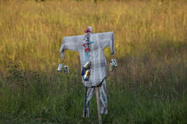 Scarecrow by Intensivelight Panorama-Edition