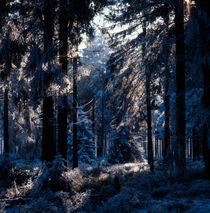 Blue winter forest von Intensivelight Panorama-Edition