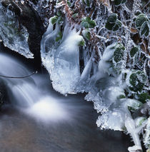 Cascade and frosty leaves by Intensivelight Panorama-Edition