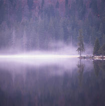 Mist rising from a lake von Intensivelight Panorama-Edition