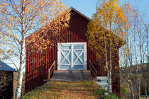 Autumn birches and red barn by Intensivelight Panorama-Edition