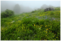Dialogue between fog and green hill by Diana Canzano