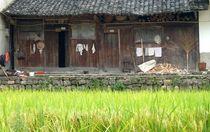 Hütte im Reis von reisemonster
