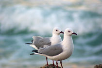 Seagulls by Herman Stadler
