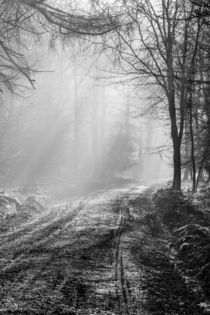 Mist In The Forest by David Tinsley