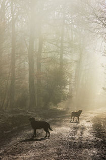 Misty Woodland Walk by David Tinsley