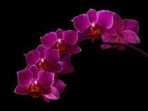 Orchideenblüte von Ive Völker