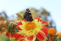 Blume mit Schmetterling von taxanin