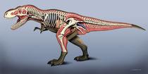 T-Rex anatomy by Fernando Ferreiro