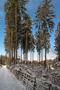 Winterdream by Bernhard Rypalla