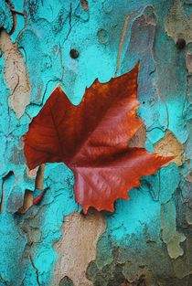 'Autumn Leaf' von CHRISTINE LAKE