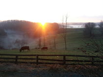 Cows at Sunrise von Joel Furches