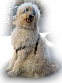 Thedogstar
