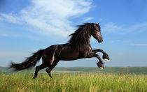 Friesian horse running von Tamara Didenko
