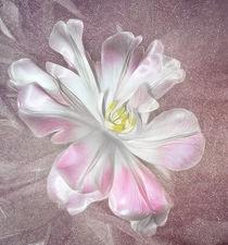 Tulip von Fiona Messenger