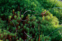Tangle of mosses von Intensivelight Panorama-Edition