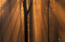 Misty autumn forest by Intensivelight Panorama-Edition