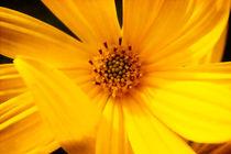 Yellow-beauty-srgb