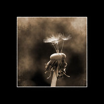 Dandelion clock - Vintage by freedom-of-art