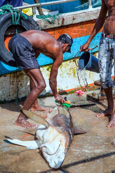 Fish-washing