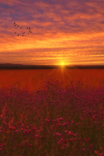 Scarlet-fields