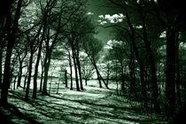 Aus dem Wald heraus by Bastian  Kienitz