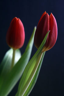 Tulpenfrühling von Heidrun Lutz