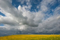 A storm is brewing over a Canola field in the Palouse near Moscow, Idaho State, USA by Wolfgang Kaehler