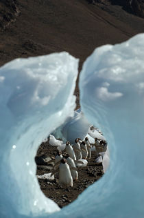 ANTARCTICA, ANTARCTIC PENINSULA, DEVIL ISLAND, ADELIE PENGUINS WALKING ON BEACH, VIEW THROUGH HOLE IN ICE PEBBLE by Wolfgang Kaehler