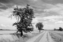 Fruit trees along the road to Borstel by Harald Walker
