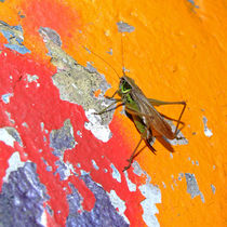 Heuschrecke auf bunter Graffiti Wand (Grasshopper and colourful wall) von Dagmar Laimgruber