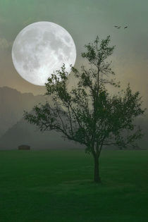 Moonlight-on-the-plains