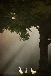 A MEETING UNDER THE TREE von tomyork