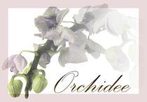 Orchidee-1