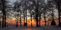 Winterlicher Wald am Abend by Rainer Rombach