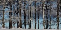 Winterlicher Wald von Rainer Rombach