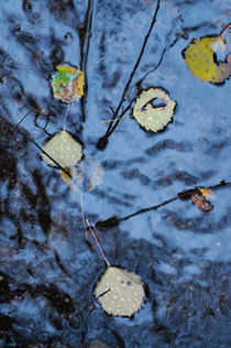 Autumn leaves in a puddle von Intensivelight Panorama-Edition
