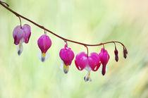 Frühlingssinfonie  von AD DESIGN Photo + PhotoArt