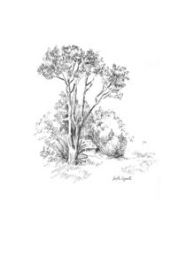 Landscape drawing - tree and house