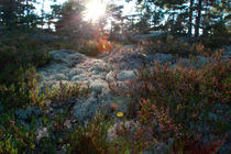 Swedish forest by Intensivelight Panorama-Edition