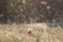 Dancing midges by Intensivelight Panorama-Edition