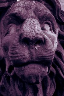 Lion face by dagino