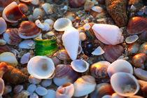 Seashells von Larisa Kroshkin