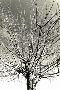 A treetop.  von Gordan Bakovic